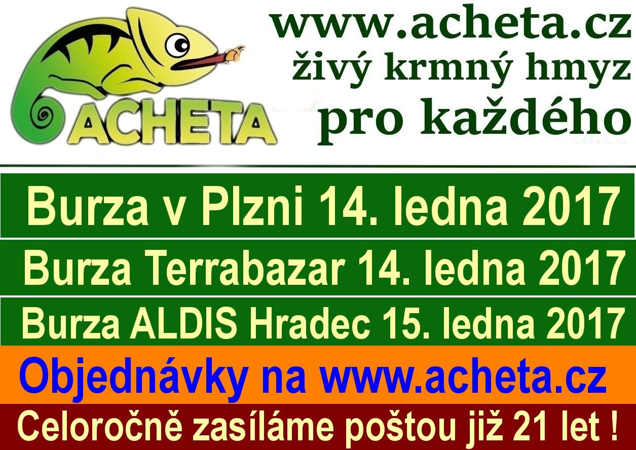 Burzy: Plzeň KD Peklo, Praha Terrabazar a Hradec Králové Aldis