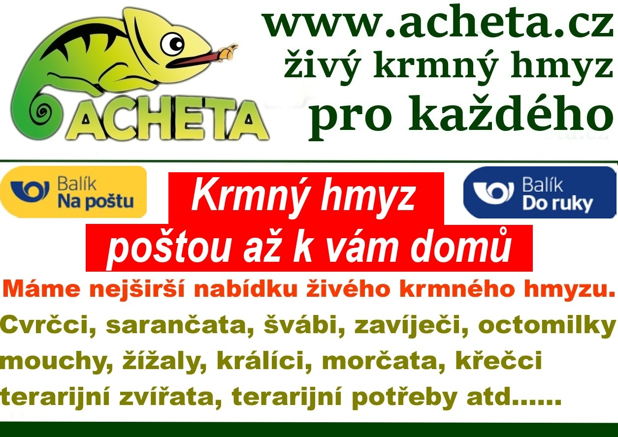 Prázdninový provoz Achety